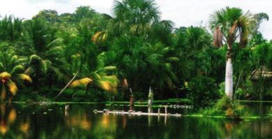 Región omagua: Clima Relieve, Flora y Fauna