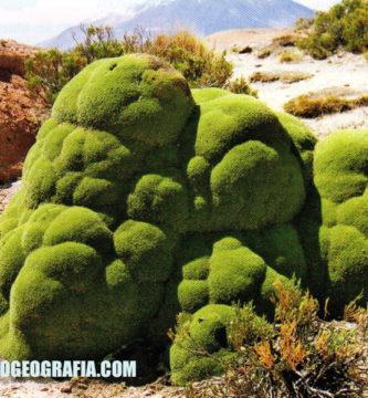 Región Janca: Clima, Relieve, Flora y Fauna