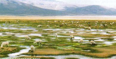 Región Puna: Clima, Relieve, Flora y Fauna