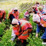 Región Quechua: Clima, Relieve, Flora y fauna