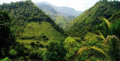 Región Rupa Rupa: Clima, Relieve, Flora y Fauna