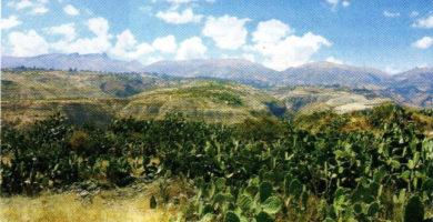 Región Yunga: clima, relieve, flora y fauna