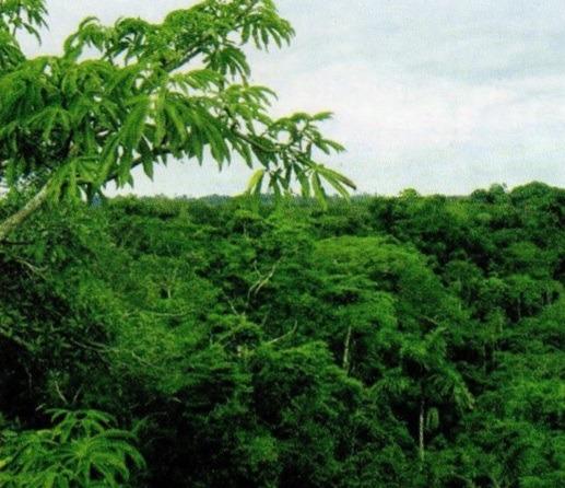 bosque tropical del Pacífico