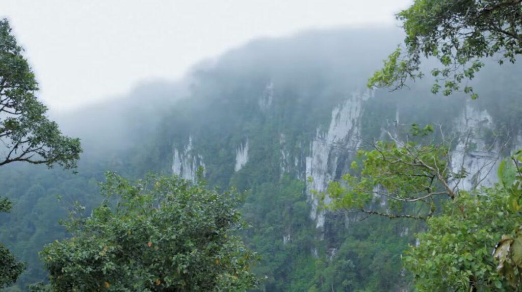 Bosque de Protección Alto Mayo