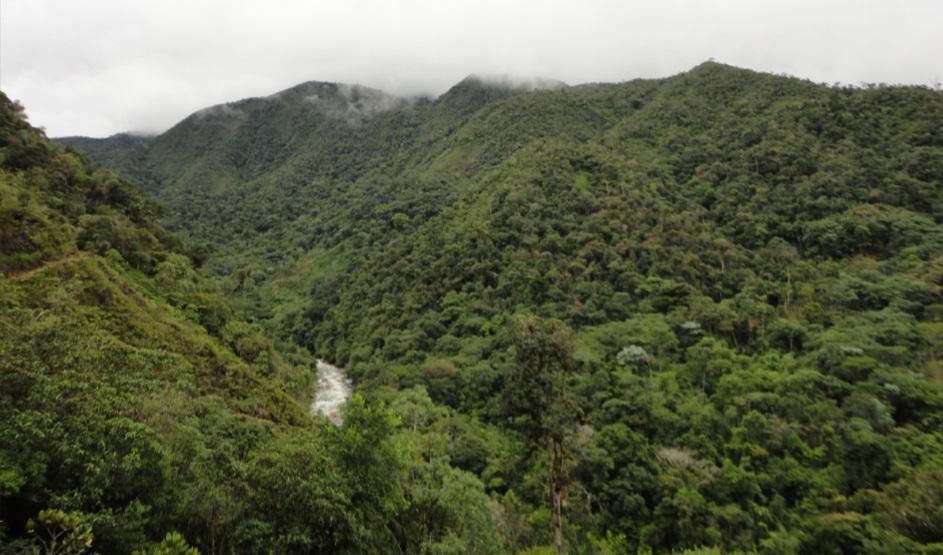 Bosque de Protección Pui Pui