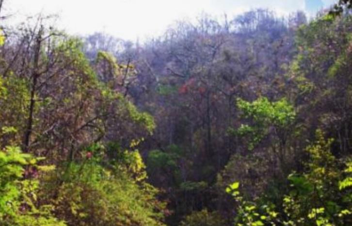 Bosque de Protección Puquio Santa Rosa